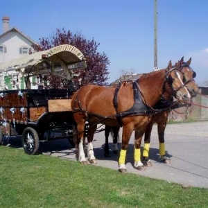 Excursions in a horse-drawn carriage